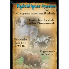 View full profile for Ranchhauss Aussies