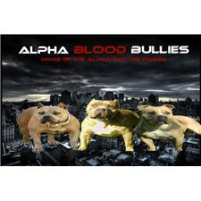 View full profile for ALPHA BLOOD BULLIES