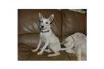 Picture of mycarolinadog.com -Female CD