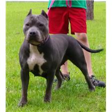 View full profile for Southern Bluebell Kennel