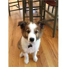 View full profile for JTailBorderCollies