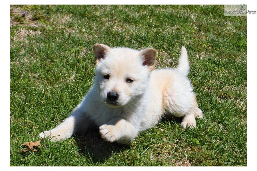 Koda Dog Name