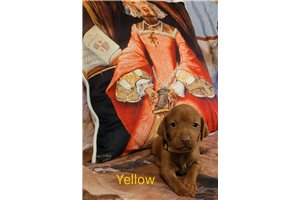 Picture of YellowGirl