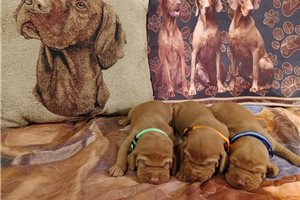 Picture of Male Pups Born