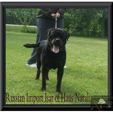 View full profile for Vom Avensis Rottweilers