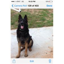 View full profile for Vonderskitts German Shepherds