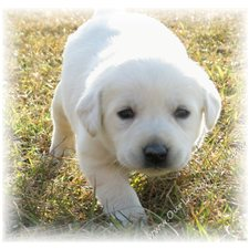 View full profile for Our Lovable Labs