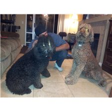 View full profile for Dannalee Poodles