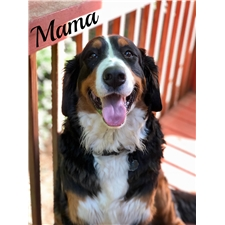 View full profile for Bernese Of The Vinyards