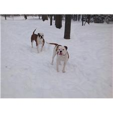 View full profile for Nicks American Bulldogs