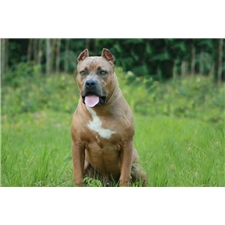 View full profile for Coyote Pitbulls