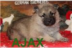 Picture of Ajax AKC