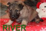 Picture of RIVER AKC