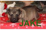 Picture of JAKE AKC