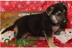 Picture of Chase AKC