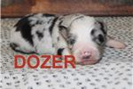 Picture of Dozer