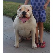 View full profile for Brickhouse American Bulldogs