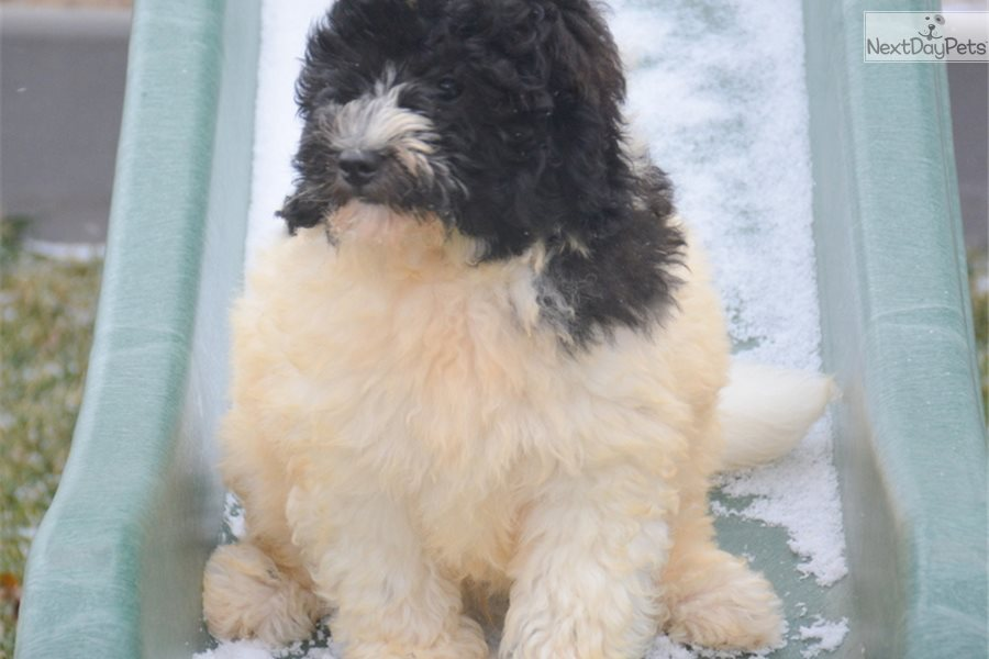 Mixedother Puppy For Sale Near Fort Wayne Indiana