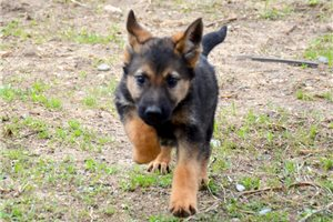 Picture of GSD OFA Two Nine