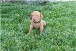 Picture of Green Male Puppy