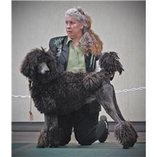 View full profile for Moondance Standard Poodles
