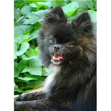 View full profile for Home Bred - Powdersville Poms