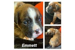 Picture of Emmett