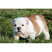 View full profile for Weaver Bulldogs
