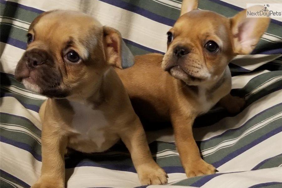 Grooming Dogs Madera