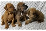 Picture of Gorgeous ELECTRA litter