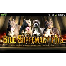 View full profile for Blue Supremacy Pits