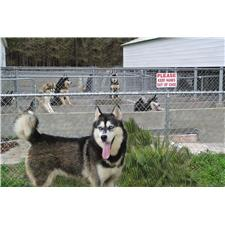 View full profile for siberia husky kennel