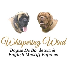 View full profile for Whispering Wind Bordeauxs & Mastiffs