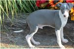Picture of SIMCA-BEAUTIFUL SWEET BOY