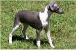 Picture of BLUZ-BEAUTIFUL BOY