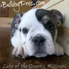 View full profile for Bulldog Pros
