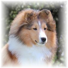 View full profile for Holly Bluff Shelties