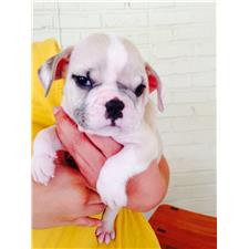 View full profile for Fordsbulldogs
