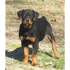 View full profile for Clark Hollow Rotti's