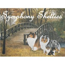 View full profile for Symphony Shelties