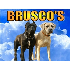 View full profile for Brusco's Cane Corso