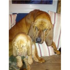 View full profile for Lucas Bloodhounds