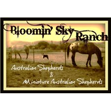View full profile for Bloomin Sky Ranch