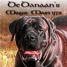 View full profile for DeDanaan's Magic Mastiffs