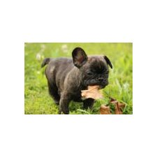 View full profile for Mo French Bulldogs
