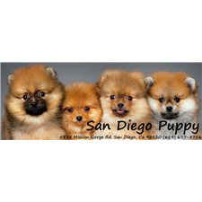 View full profile for San Diego Puppies