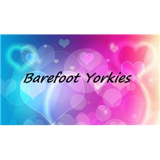View full profile for Barefoot Yorkies