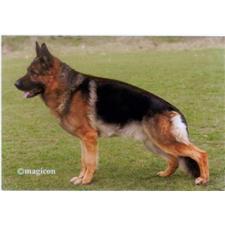 View full profile for Carolina Canine