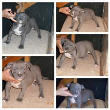 View full profile for BlueRay Bullys