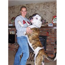 View full profile for Walker's Ransom American Bulldogs